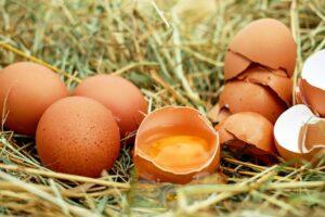 Światowy Dzień Jaja!