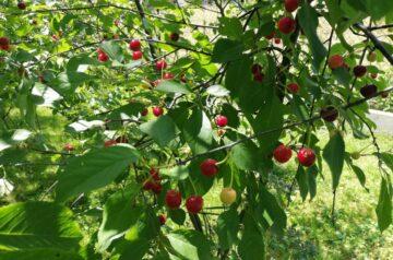 Owoce. Ile jeść, aby być zdrowym i nie przytyć?